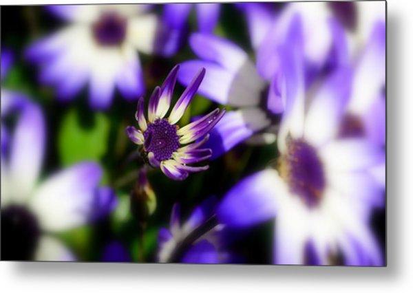 Purple Flowers Metal Print by Barbara Walsh