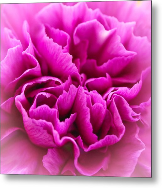 Purple Geranium In Macro Metal Print by Elizabeth Thomas