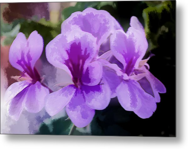Purple Geraniums  Metal Print