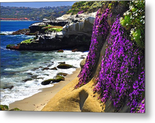 Purple Glory At La Jolla Cove Metal Print