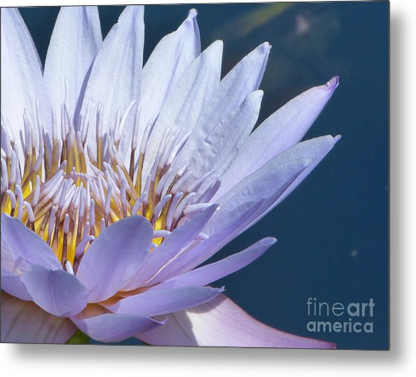 Purple Glory II Metal Print