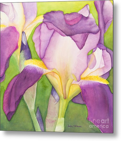 Purple Irises Metal Print