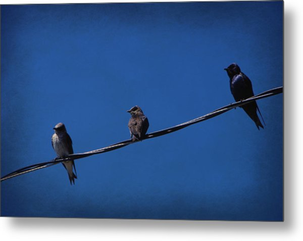 Purple Martin Trio Metal Print