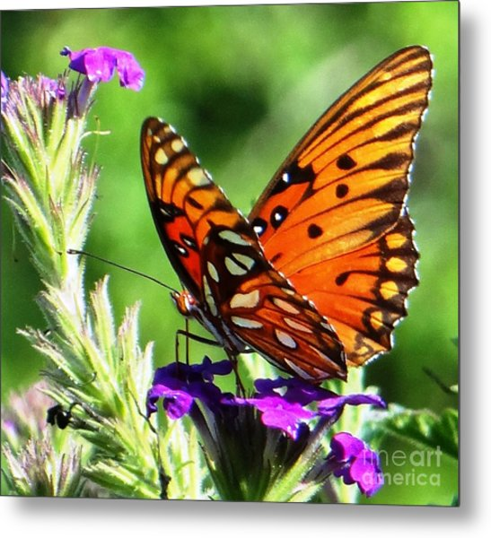 Purple Monach Landing Metal Print
