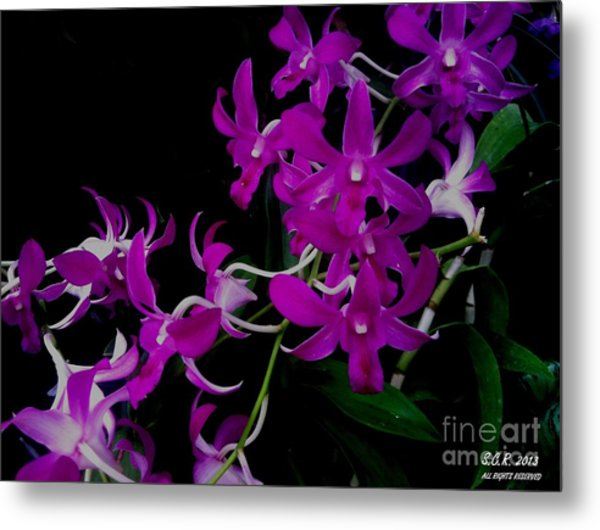 Purple Orchid Flower By Saribelle Rodriguez Metal Print