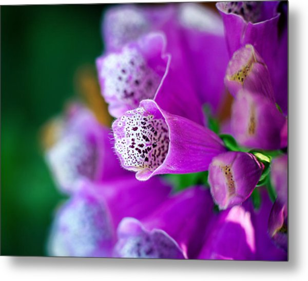 Purple Passion Metal Print by Tammy Smith