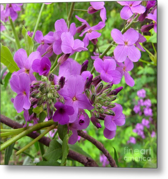 Purple Popping 2 Metal Print by Cedric Hampton