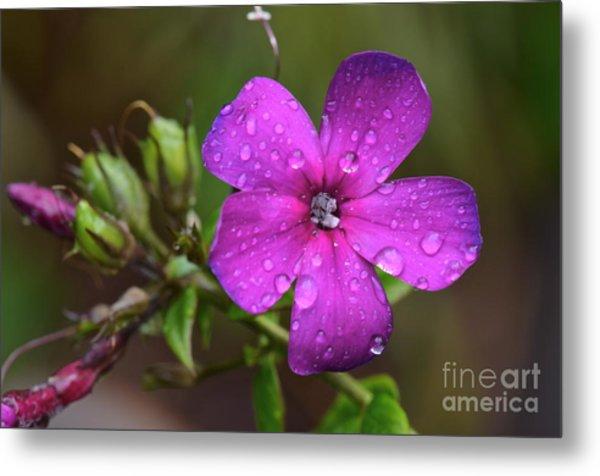 Purple Rain... Metal Print