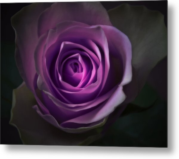 Purple Rose Flower - Macro Flower Photograph Metal Print