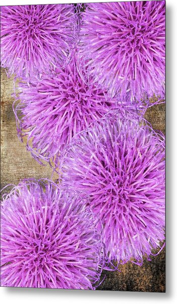 Purple Thistle - 2 Metal Print