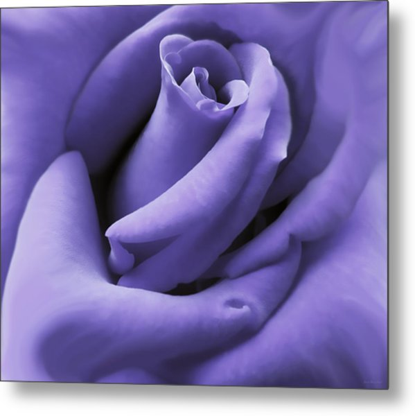 Purple Velvet Rose Flower Metal Print
