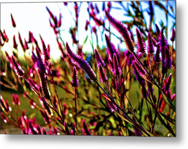 Purpleness Metal Print