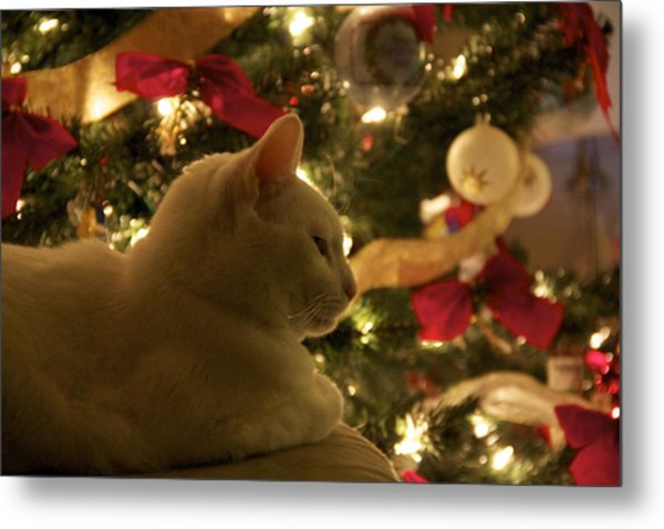 Purrfect Holidays Metal Print