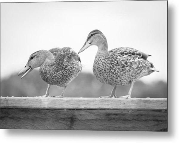 Quack Quack Metal Print