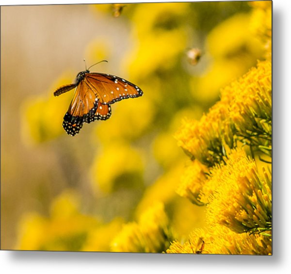 Queen In Flight Metal Print