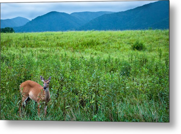 Queen Of The Cove Metal Print by Ron Plasencia