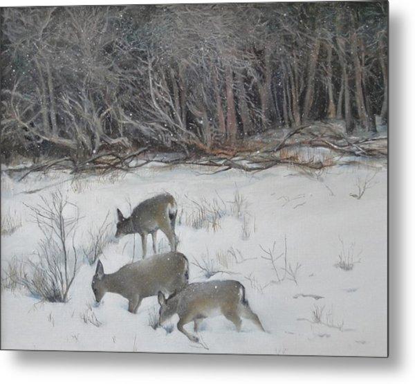 Quiet Winter Day  Metal Print
