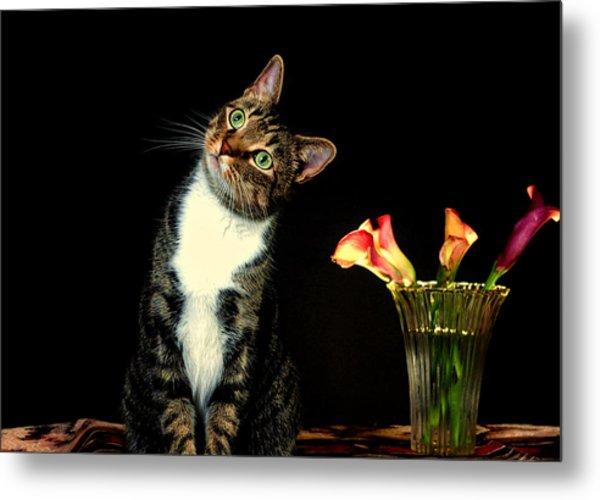 Quizzical Cat Metal Print by Linda Mcfarland