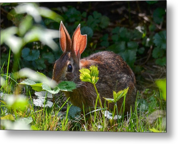 Metal Print featuring the photograph Rabbit Ears by Michael Hubley