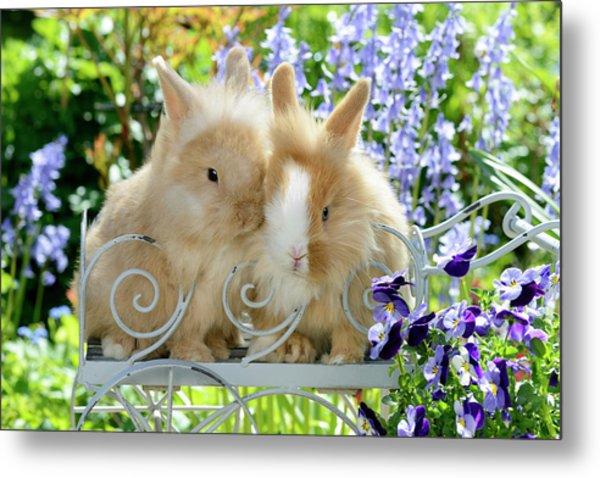 Rabbits In Garden Metal Print