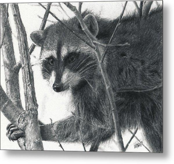 Raccoon - Charcoal Experiment Metal Print
