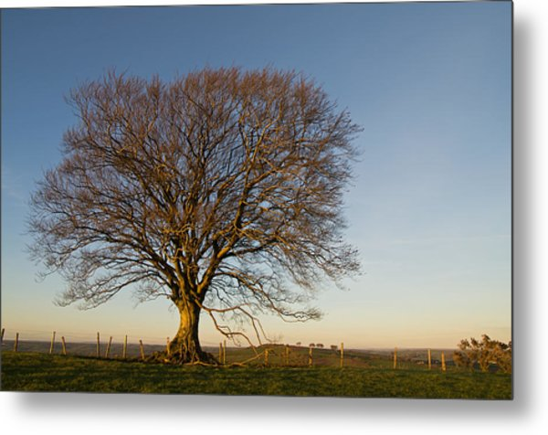 Raddon Hill Top Tree Metal Print