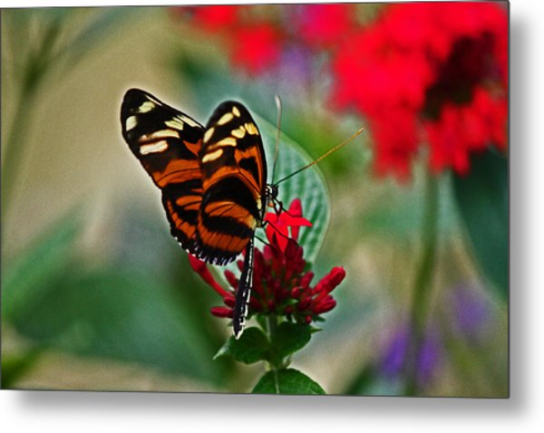Radiant Butterfly Metal Print