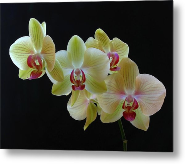 Radiant Orchid Metal Print by Juergen Roth