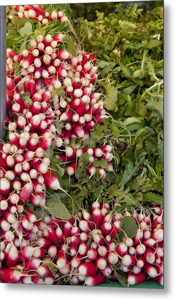 Radishes Metal Print by Art Ferrier