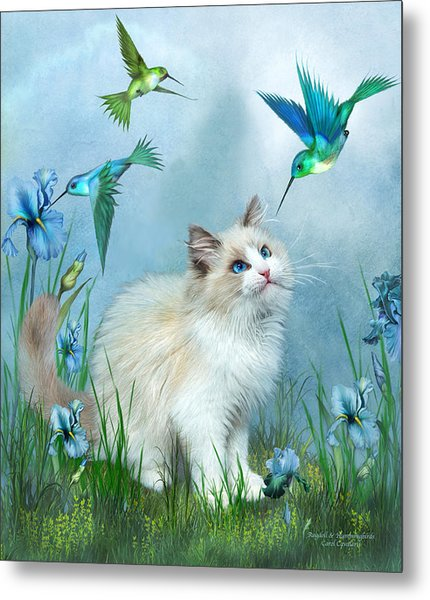 Ragdoll Kitty And Hummingbirds Metal Print