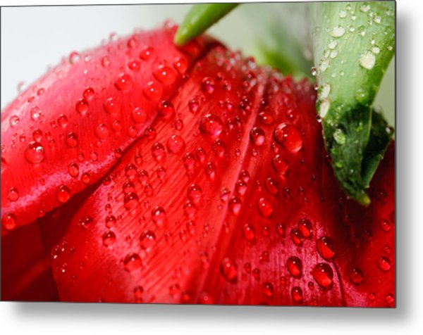 Rain Drops Metal Print by Ivelin Donchev