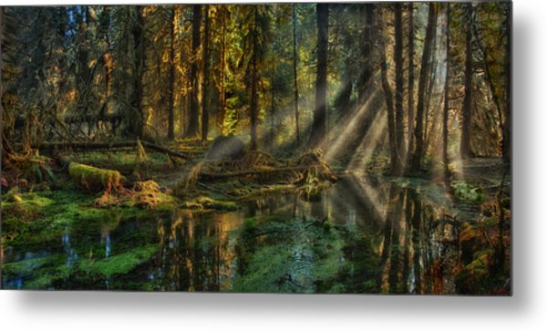 Rain Forest Sunbeams Metal Print