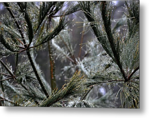 Rain On Pine Needles Metal Print