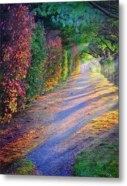 Rainbow Path Metal Print by William Schmid