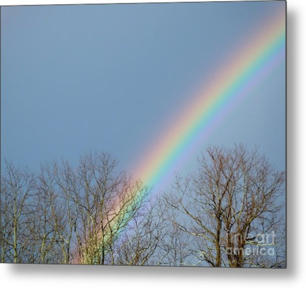 Metal Print featuring the photograph Rainbow Through The Tree Tops by Kristen Fox