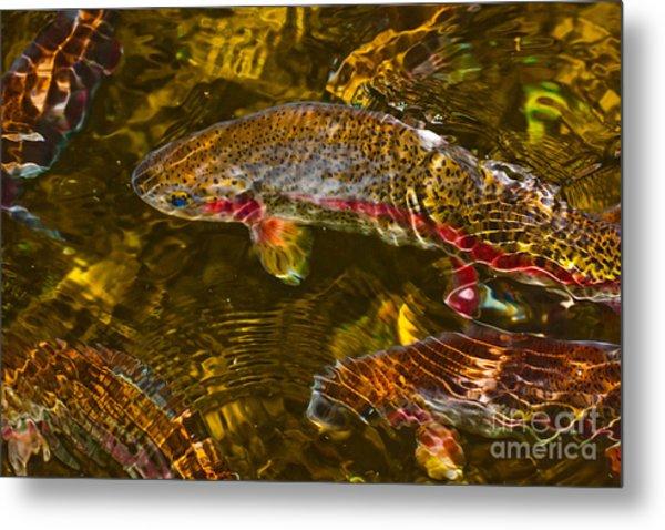 Rainbow Trout Metal Print by Cari Gesch