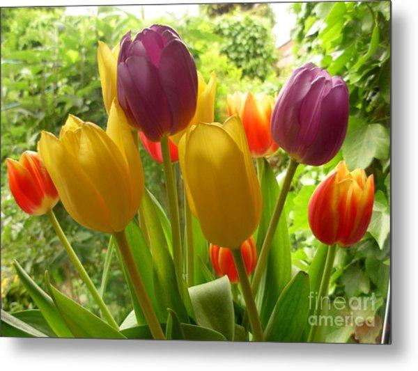 Rainbow Tulips  Metal Print