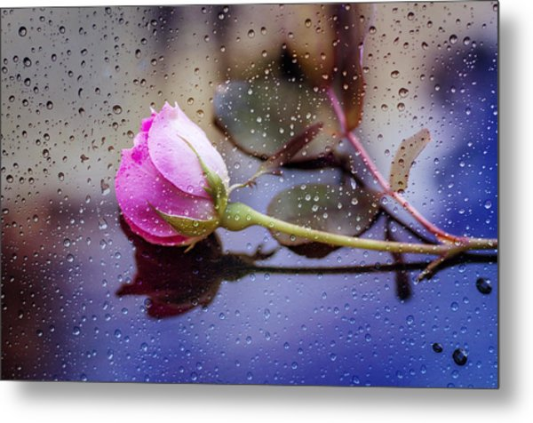 Raindrops And The Rose Metal Print