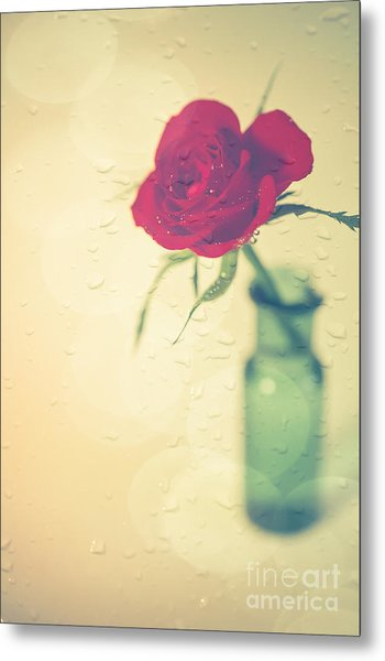 Raindrops On Roses . . . Metal Print