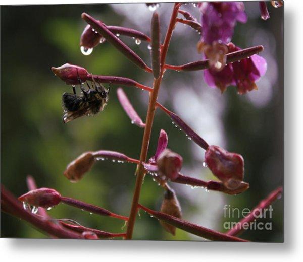 Rained Soaked Brandywine Bee Metal Print by Amanda Holmes Tzafrir