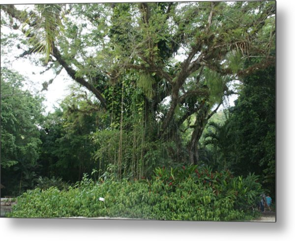 Rainforest At Ys River Metal Print by Olaf Christian