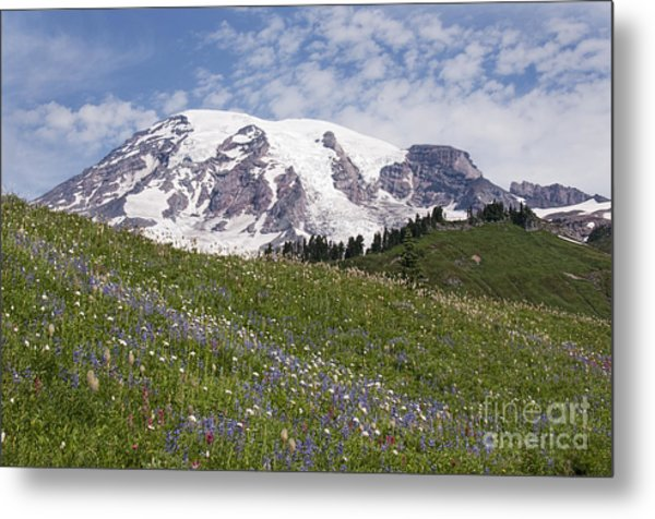 Rainier's Wildflowers Metal Print