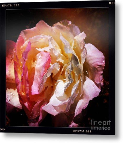 Rainy Rose Metal Print