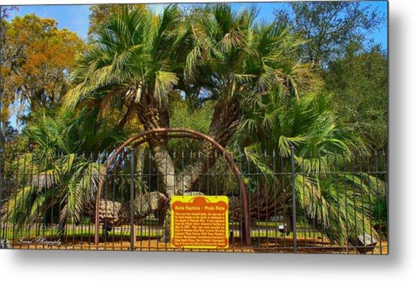 Rare Palm Tree Metal Print
