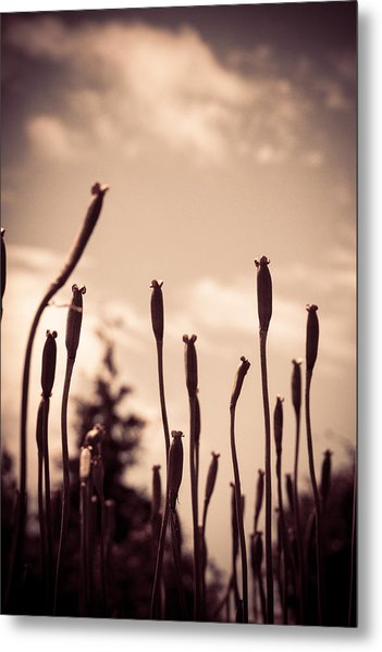 Flowers Reaching For The Sky Metal Print