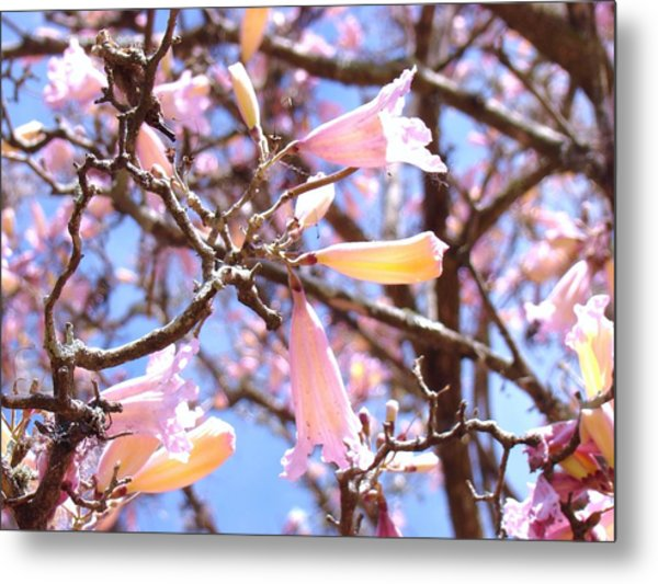 Reaching Out Metal Print by Van Ness