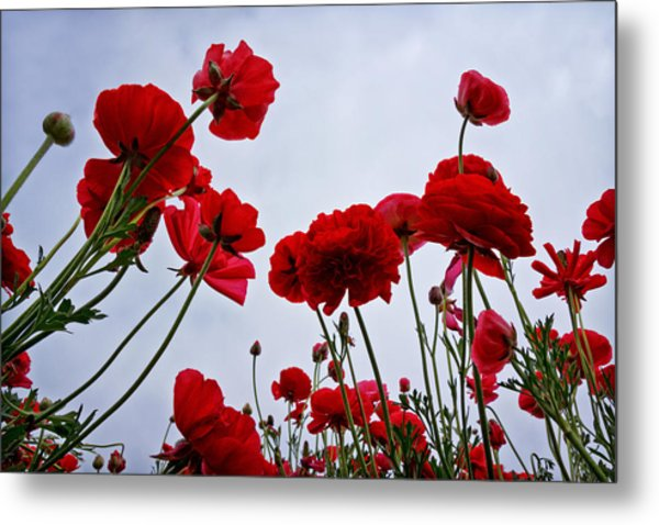 Reaching Towards The Sky Metal Print by Donna Pagakis