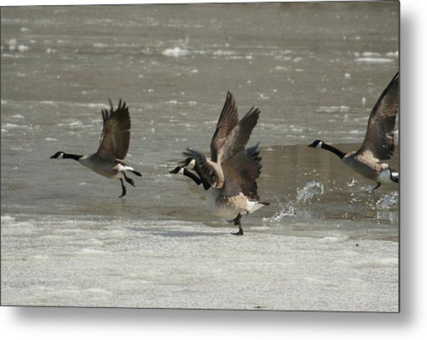 Ready For Take Off Metal Print by Frederic Vigne