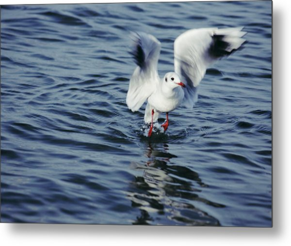 Ready To Fly Metal Print by SYoung Photography