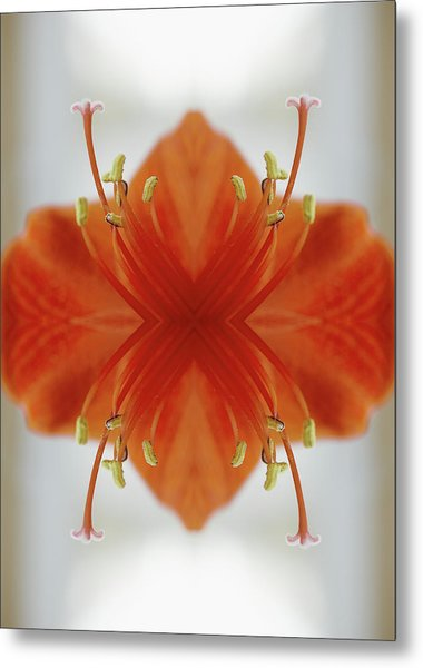 Red Amaryllis Flower Metal Print by Silvia Otte